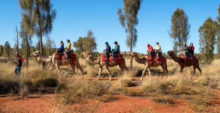Uluru and Kings Canyon Tour Camel Ride