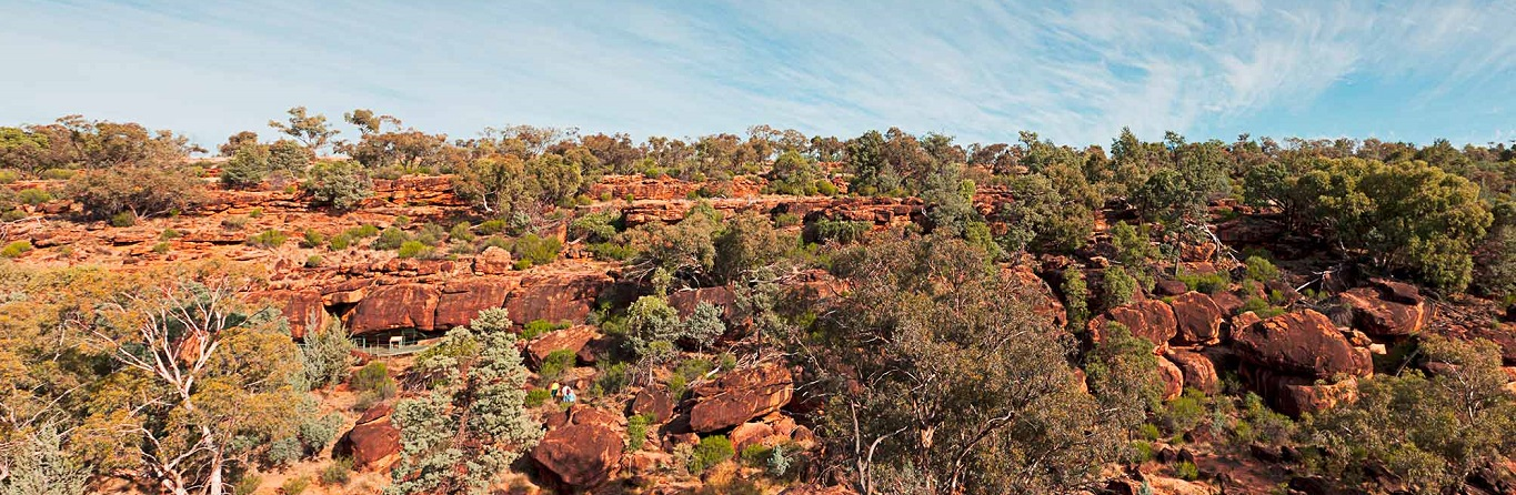How plants survive in Uluru's surrounds
